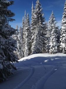Snowwoods