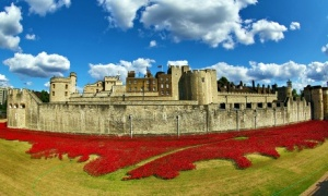 Ceramic poppies fill the Tower of London moat